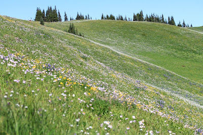 Skyline Divide Meadows