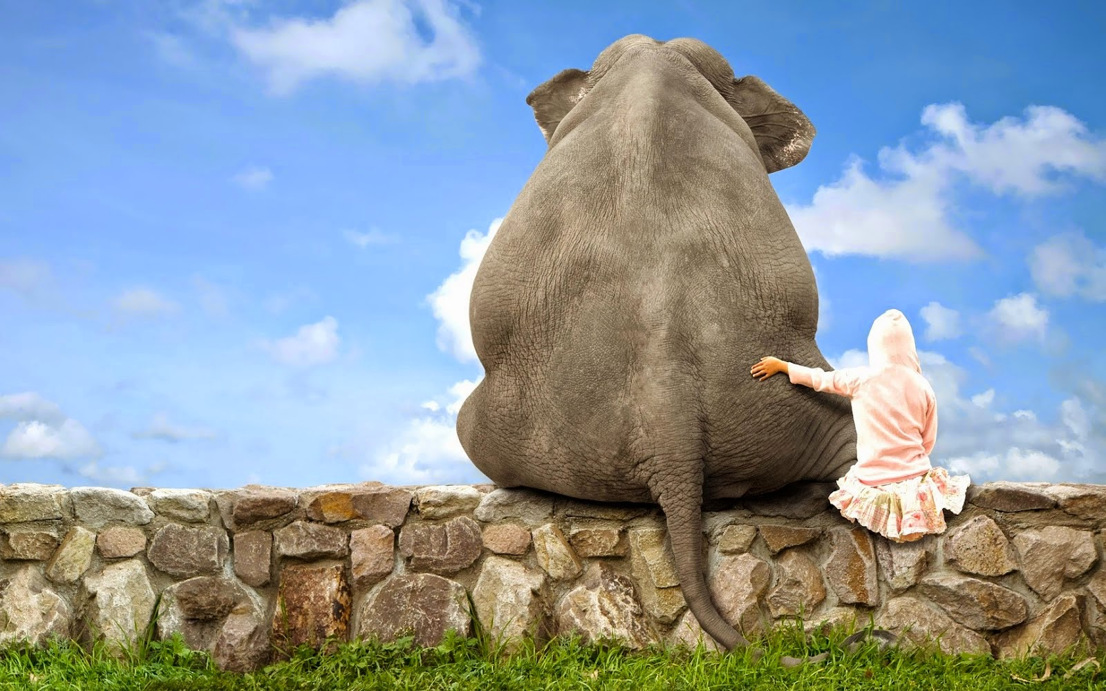 Lustige Tierfotos HausTierSuche at Private  - lustige tierbilder bilder