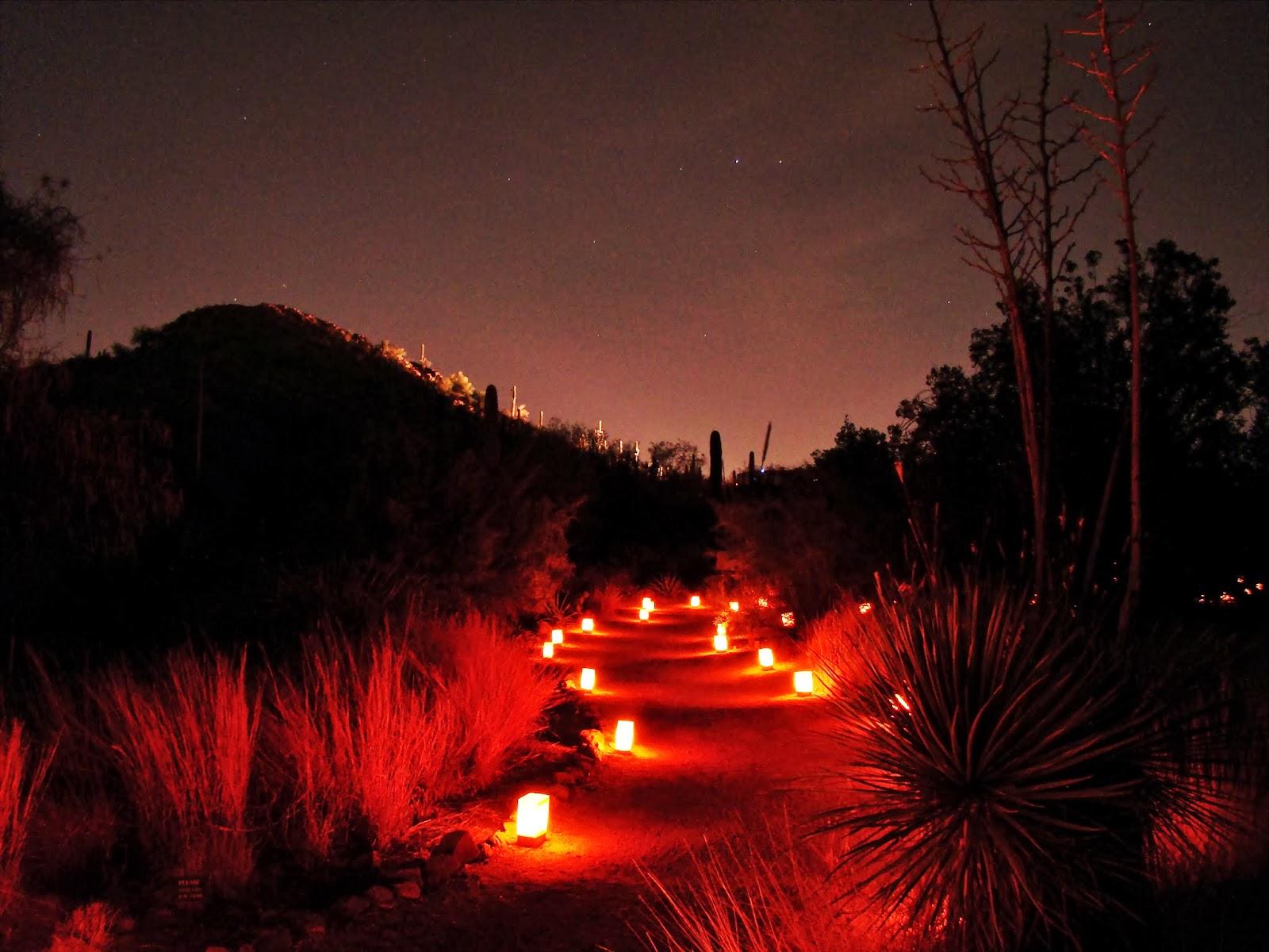 Scottsdale Daily Photo Luminarias On A Trail At The Desert Botanical Garden