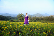 Hari priya photo shoot among yellow folwers-thumbnail-20