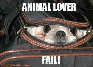Funny Animal Pictures With Words