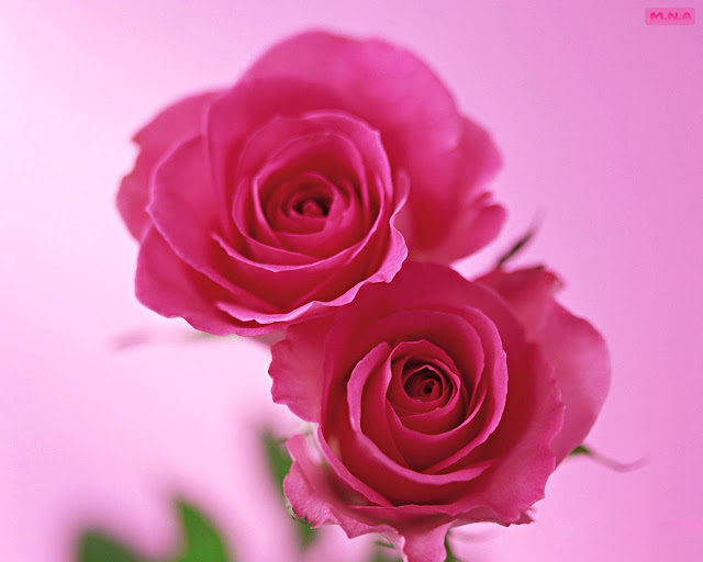 Hình ảnh hoa đẹp 04