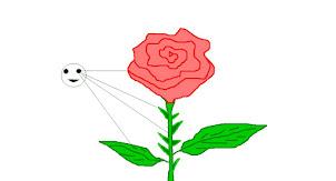 Rosa olistica