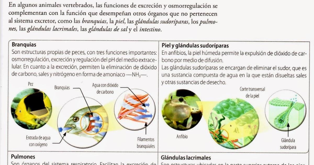 Excreción en animales vertebrados | LAS TICS EN LAS CIENCIAS NATURALES