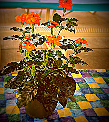 Lomo effect to flower photo