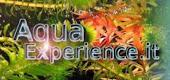 il mio sito (con forum) sull' acquariofilia
