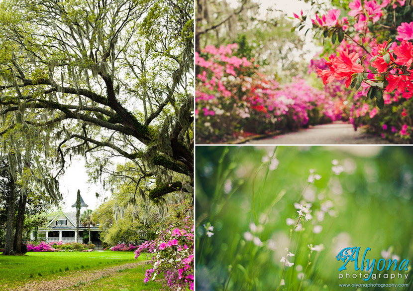 Alyona Photography Hello Spring Magnolia Plantation Gardens Charleston Sc