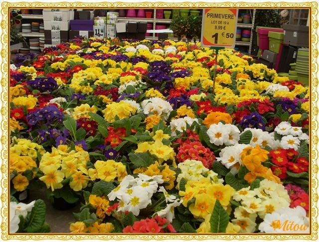 Mitou la bretonne a la jardinerie for Jardinerie des jardins