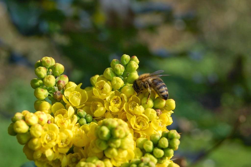 Blütenblume und Biene