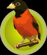 Cardenalito (Carduelis Cucullata)