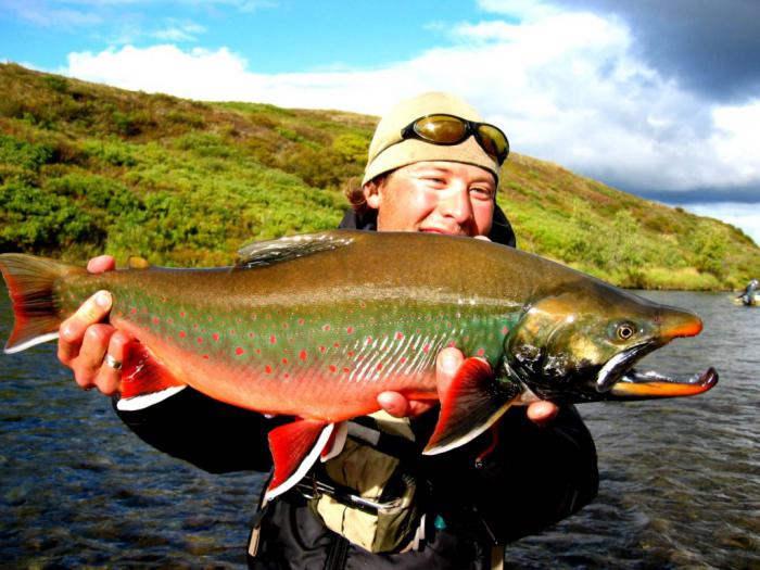 Big fishes of the world dolly varden salvelinus malma for Dolly varden fish
