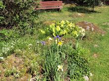 Här kommer ytterligare några bilder från min älskade trädgård.