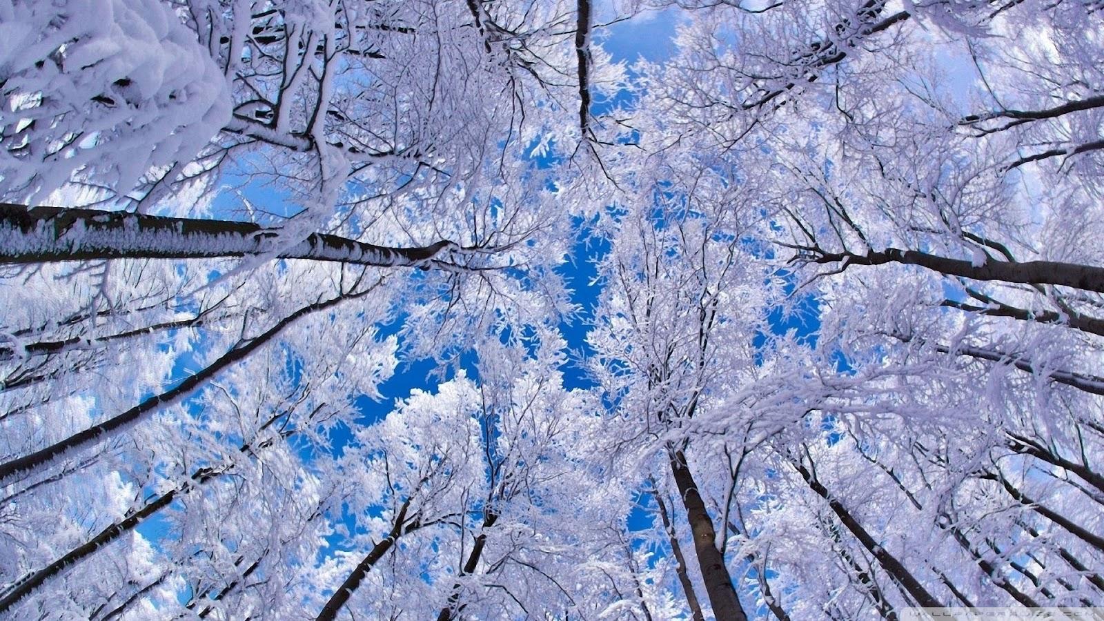 http://2.bp.blogspot.com/-fpp18dEuIAY/UPR0V2hybBI/AAAAAAAAG0o/-8Y7C8Ze7ls/s1600/neige_arbre+hiver.jpg