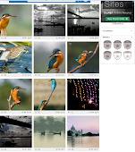 """PHOTOGRAPS AWARDED"""