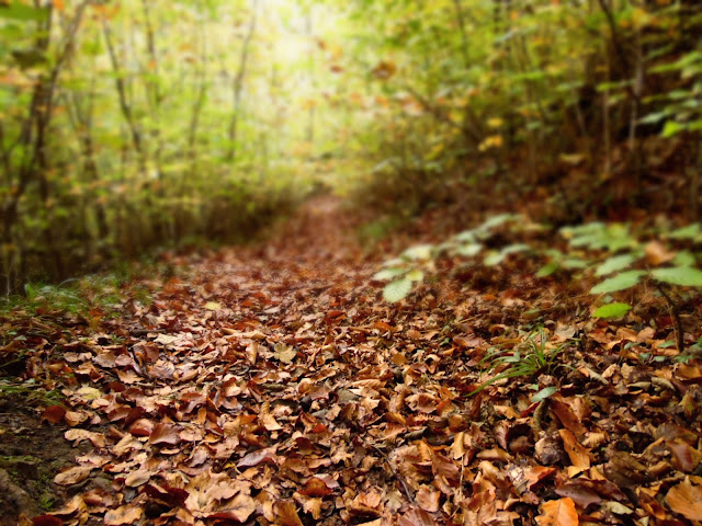 Leafy autumn path