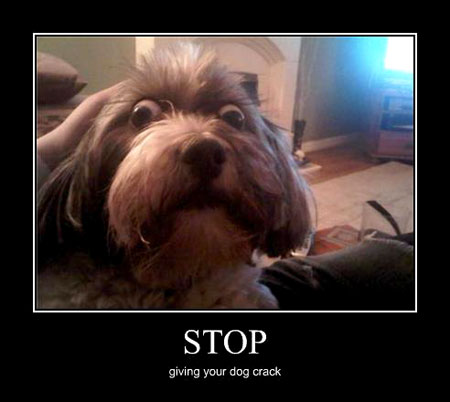 funny picture clip very demotivational dog posters