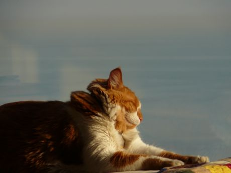 Orange and white cat sleeping in the sun