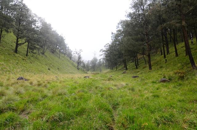 www.parasherpa.com