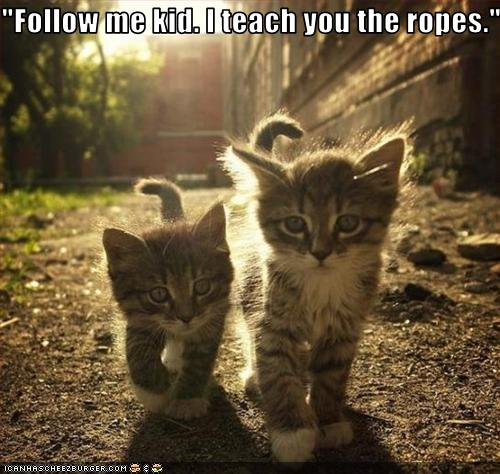 Follow me kid. I teach you the ropes. Funny Animal Pics. No copyrights claimed