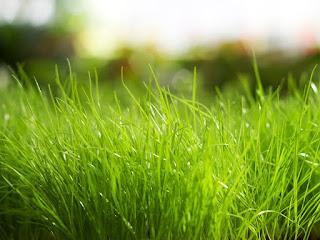 Zelena trava, proljeće slike besplatne pozadine za desktop download