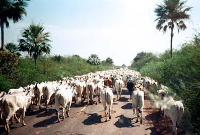 http://2.bp.blogspot.com/-fqt_ksKQGCk/T5ng4F7ei5I/AAAAAAAAA_k/JsUm8wviUNU/s1600/pantanal09b.jpg