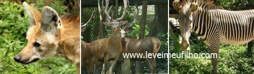 www.leveimeufilho.com
