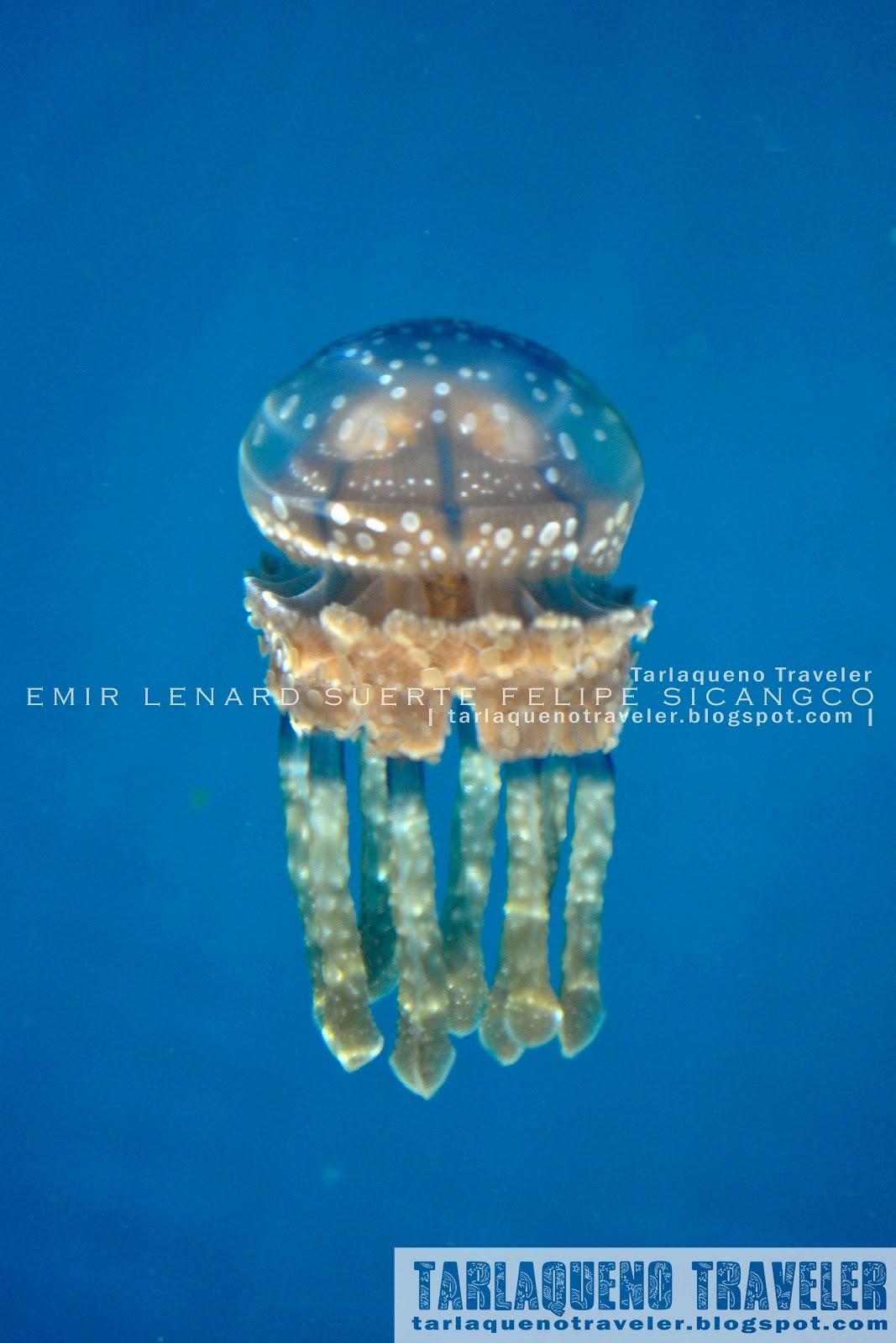 Sohoton Jellyfish Lagoon