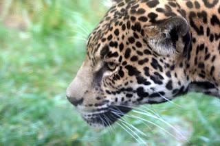 ملف كامل عن اجمل واروع الصور للحيوانات  المفترسة   حيوانات الغابة  2125548511_287397b551