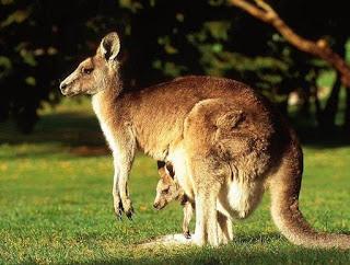Jenis dan contoh hewan mamalia