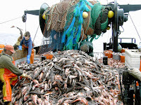 Over-exploitation of fish stocks compounds ocean damage from climate change (Image Credit: John Wallace/NOAA via Wikimedia Commons) Click to Enlarge.