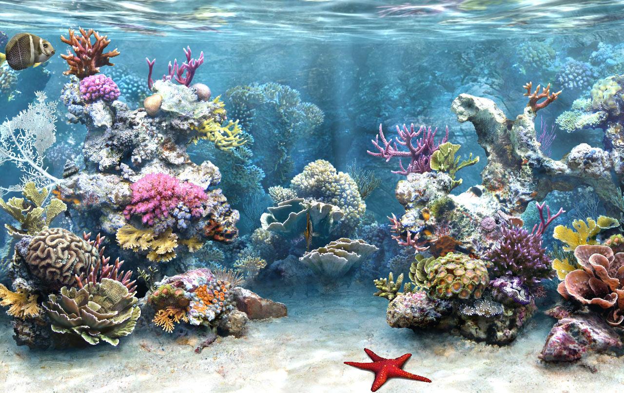 Aquarium hd wallpaper aquarium wallpaper amazing pictures for Live fish aquarium wallpaper