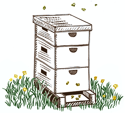 Baby Bees House Free Bee Hive Drawing