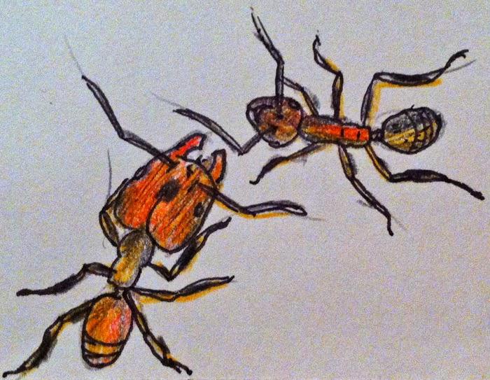 Sergio Ibarra Mellado: Las hormigas de La Vera