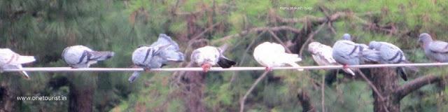 Birds  watching in himachal