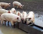 BANKERS & POLITICIANS GONE WILD:!!!!  feeding at our trough!!!