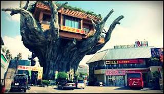 restoran-atas-pokok-di-jepun