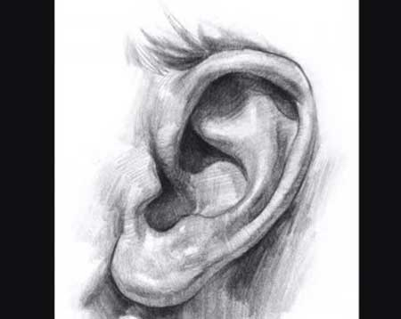 How to draw an ear - Video Lessons of Drawing & Painting