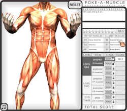 JOGO POKE-A-MUSCLE ONLINE