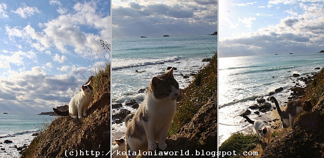 The cats of Avythos Beach, Kefalonia