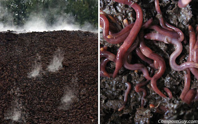 vermicompost process