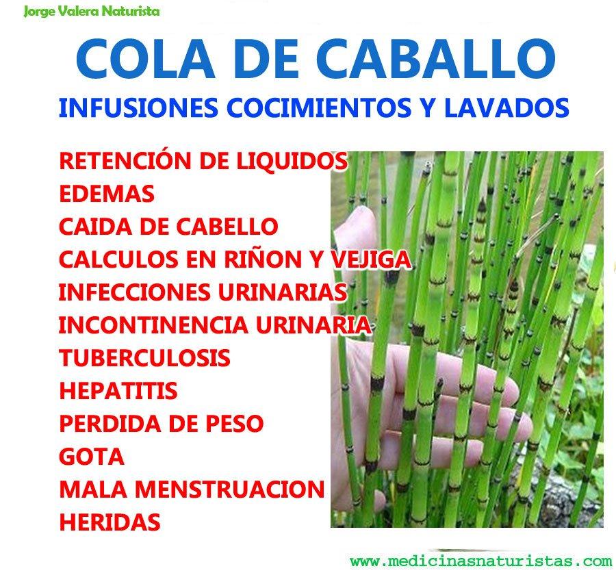 Cola De Caballo Edemas Caída De Cabello Enfermedades Y Calculos