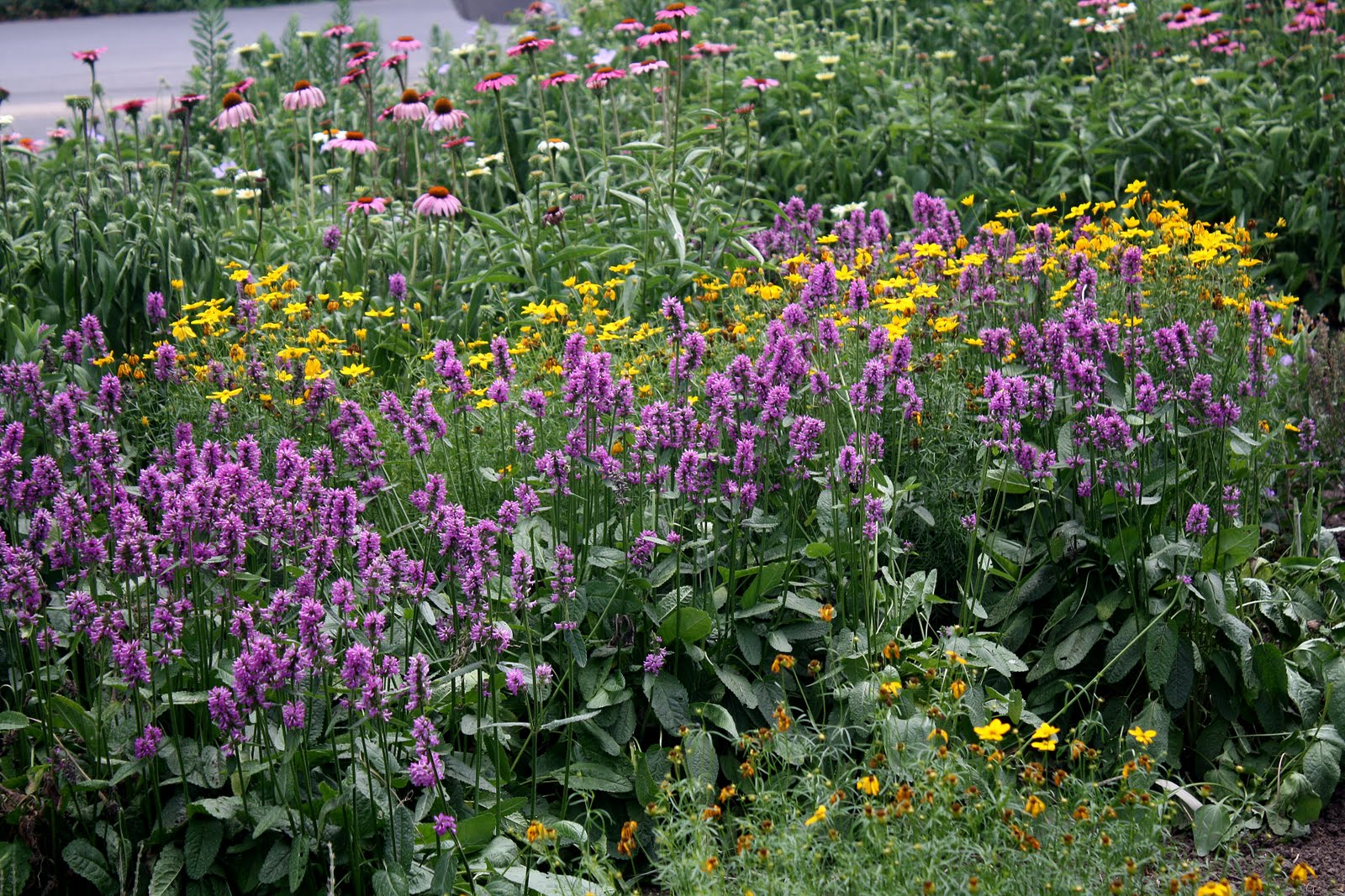 Midwest groundcovers display gardens plant trials for Piet oudolf favorite plants