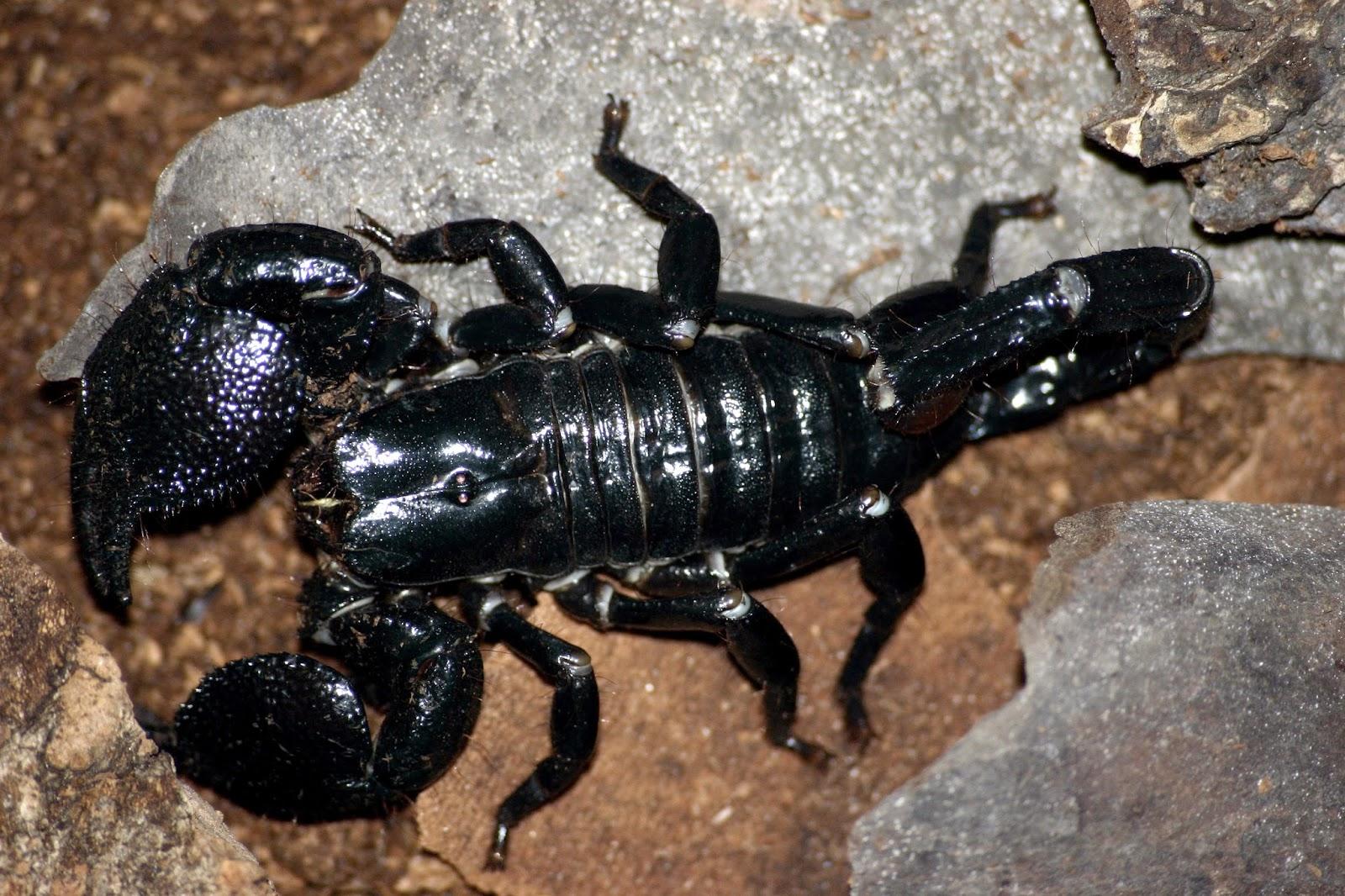 http://zoozon.blogspot.com/2015/03/scorpions-animal-pictures-3.html