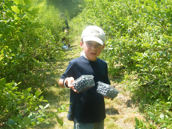 This Week in Boys - Sunday Funday Blueberry Picking
