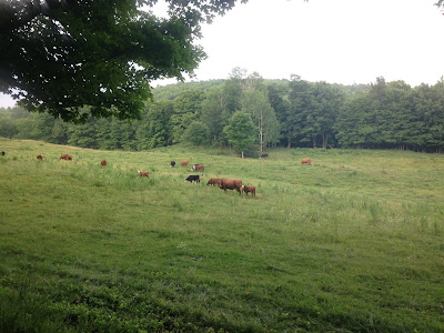 Vermont 100, ultramarathonn, run, ultrarun, Vermont, race, cows