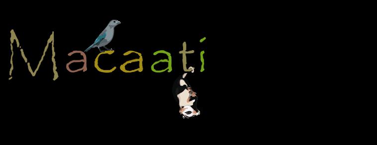 Macaati