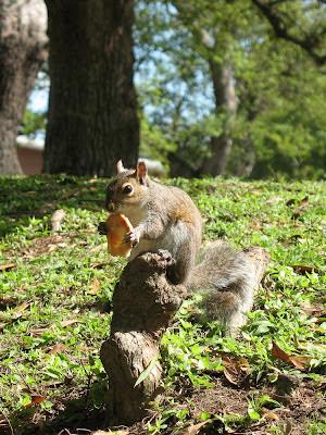 squirrel eating snack:  Audubon Park, NOLA
