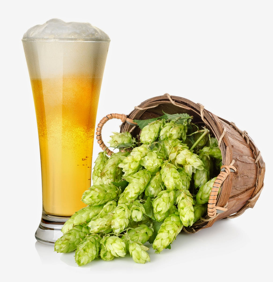 beer in glass - basket of green hops - photo image