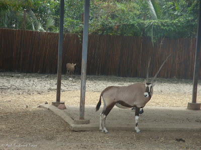 Safari World - Safari Park Bangkok Batch 3 Photo 2