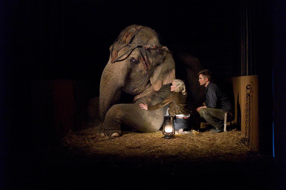 Dando Amor E Água Para Elefantes